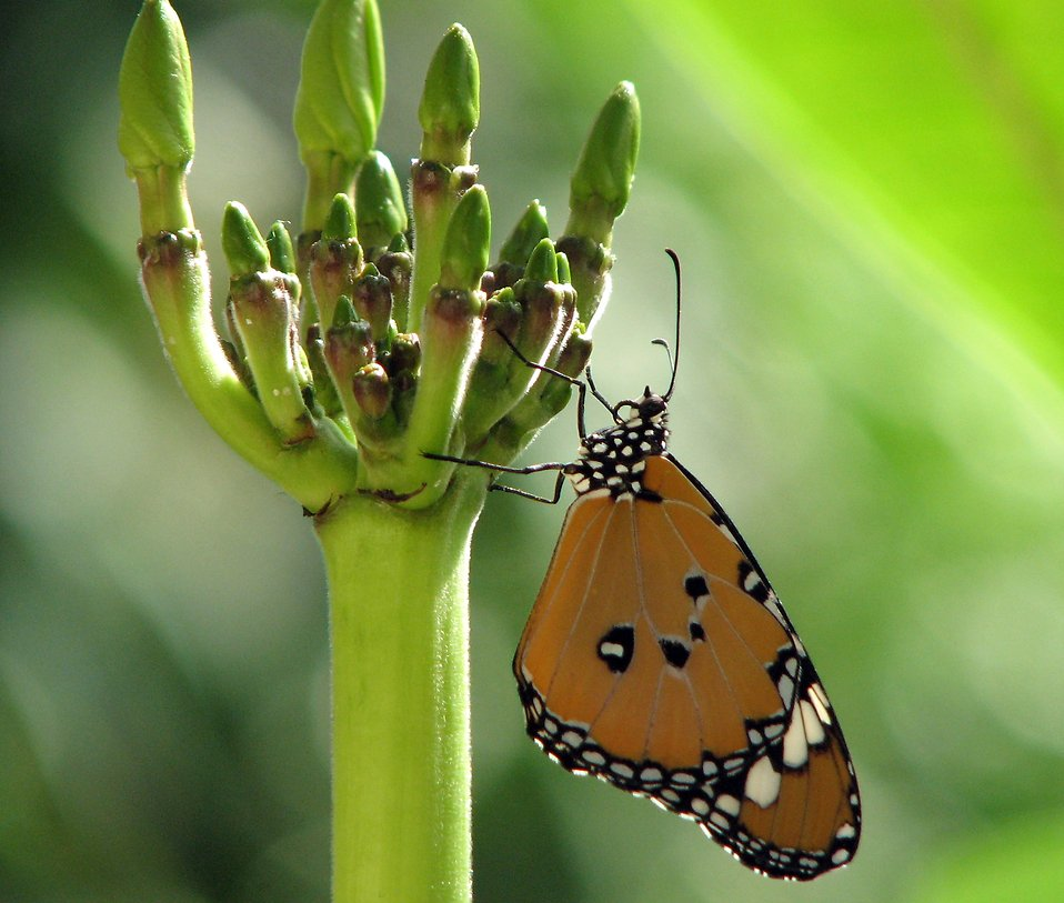 Close-up of an orange butterfly on a green flower : Free Stock Photo