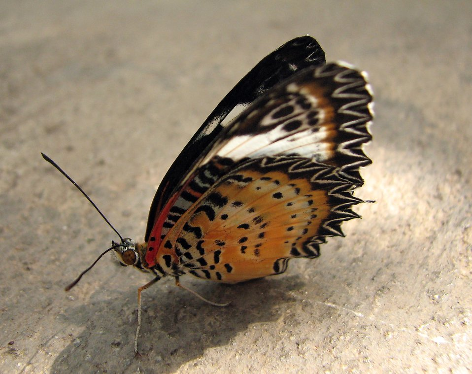 Closeup of an orange butterfly on the ground : Free Stock Photo