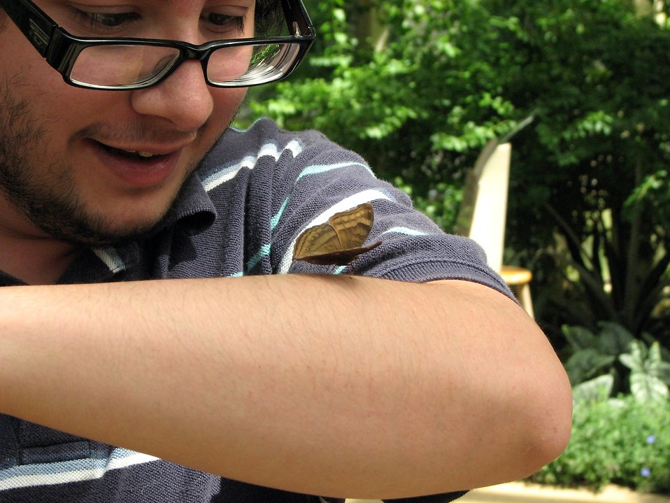 A man looking at a brown butterfly on his arm : Free Stock Photo