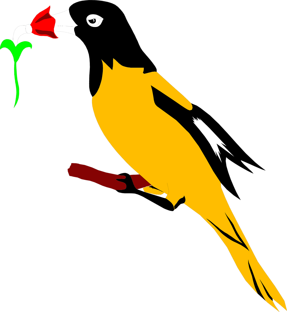 Illustration of a yellow and black oriole : Free Stock Photo