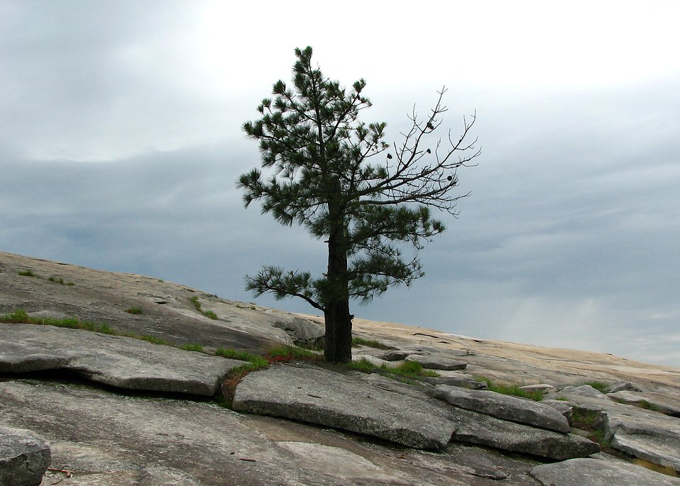 A single tree growing on a rock face of a mountain : Free Stock Photo