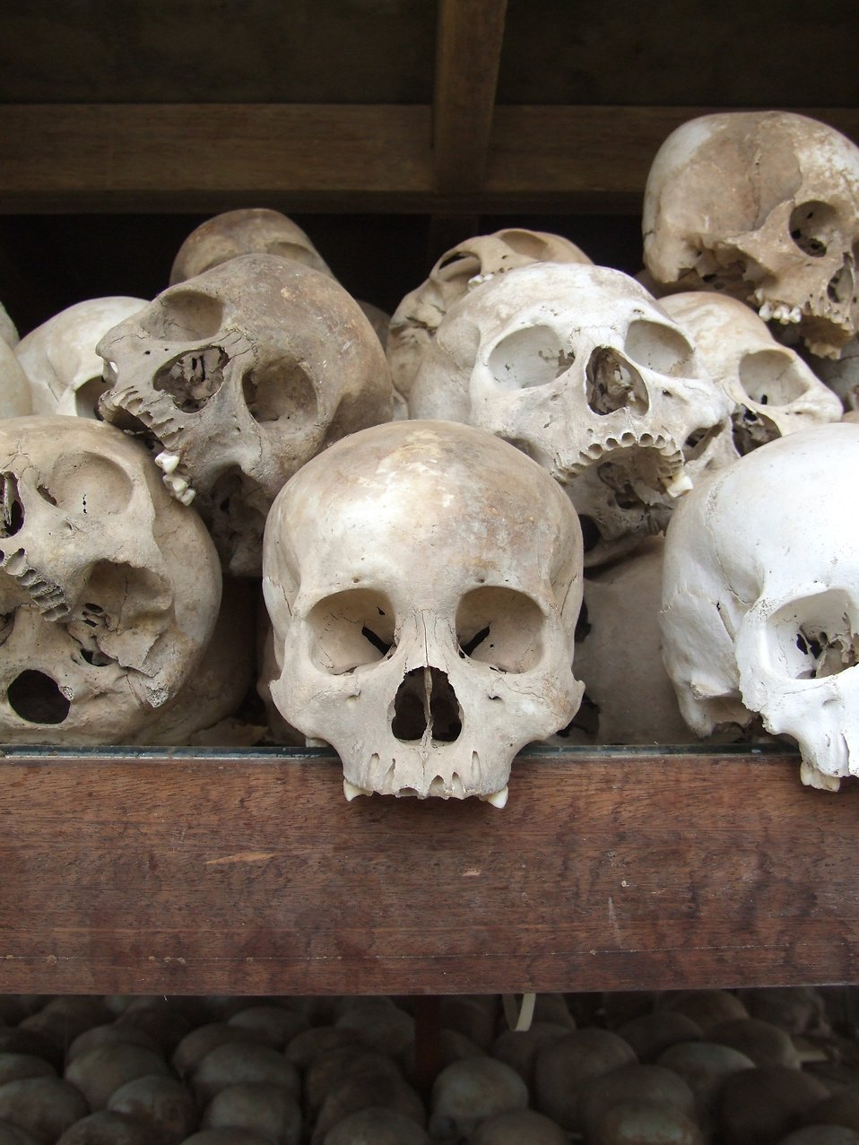 Skulls from the stupa memorial at the killing fields of Choeung Ek, near Phnom Penh, Cambodia : Free Stock Photo