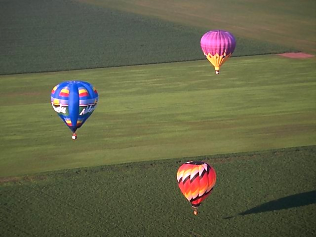 Hot air balloons flying over a field : Free Stock Photo