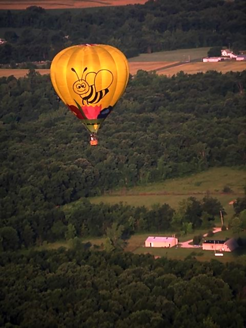 A hot air balloon with a bee design flying over trees : Free Stock Photo