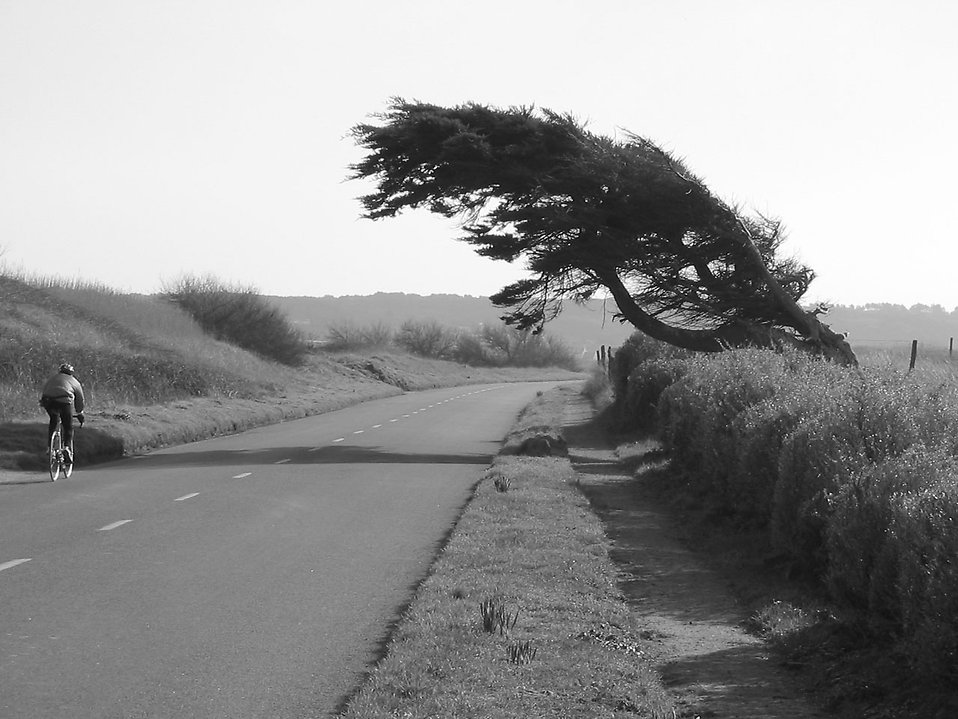 Black and white of a man riding a bike along a country road : Free Stock Photo