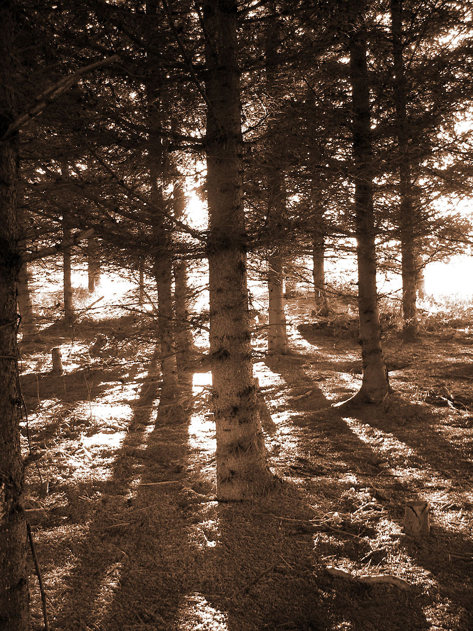 http://res.freestockphotos.biz/pictures/5/5690-black-and-white-shadows-in-the-woods-pv.jpg