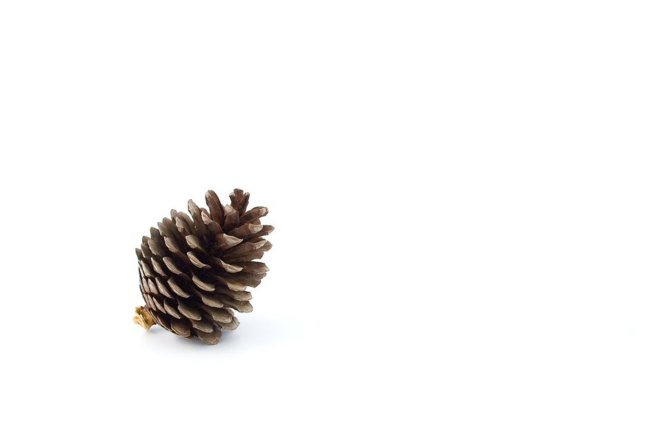 A pine cone isolated on a white background : Free Stock Photo