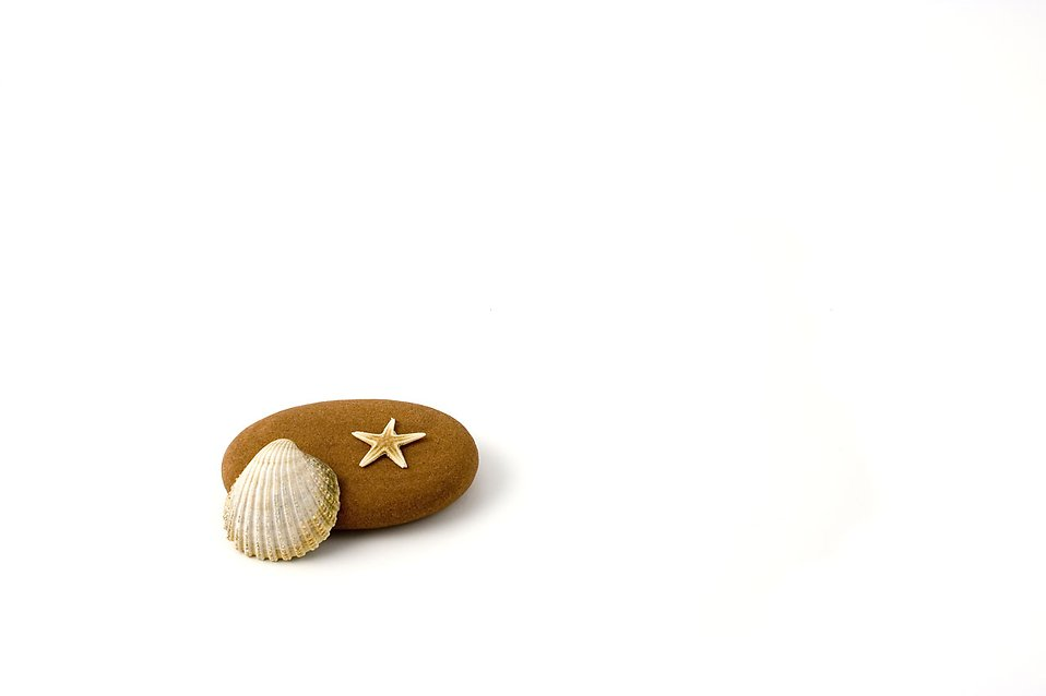 A sea shell, starfish and rock isolated on a white background : Free Stock Photo