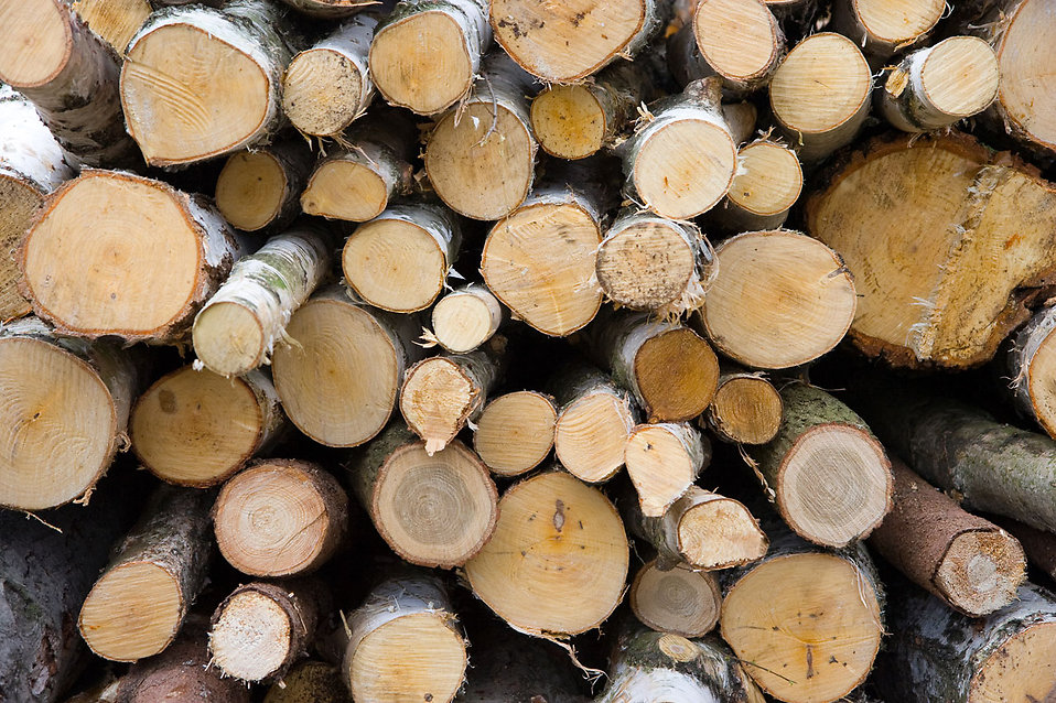 A pile of firewood : Free Stock Photo