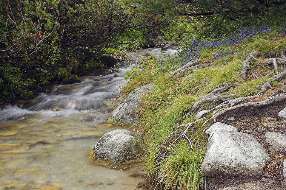 A small stream : Free Stock Photo