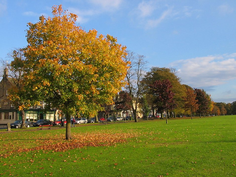 A park in autumn : Free Stock Photo