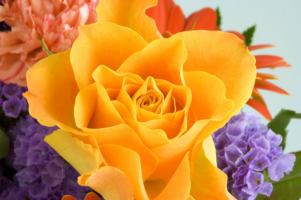 Close-up of a yellow rose and other flowers : Free Stock Photo