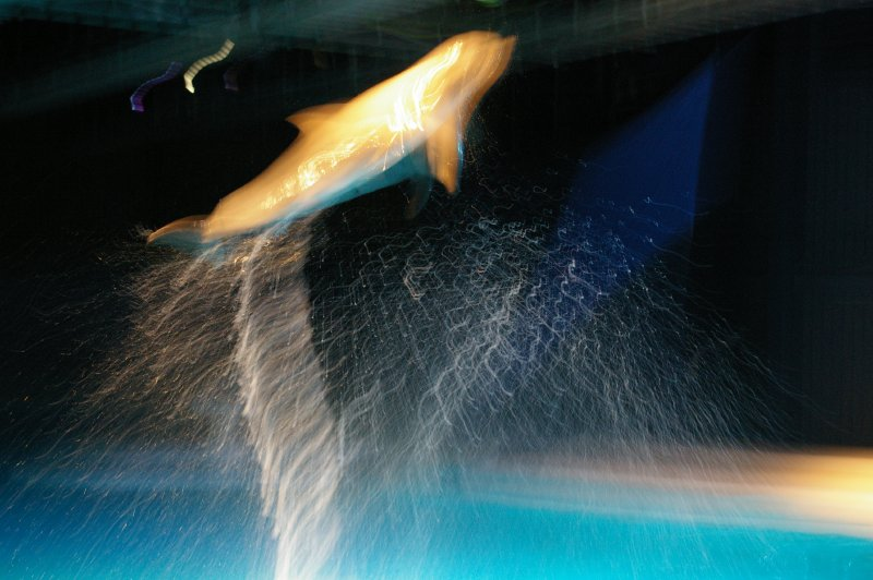 A dolphin jumping in the water : Free Stock Photo