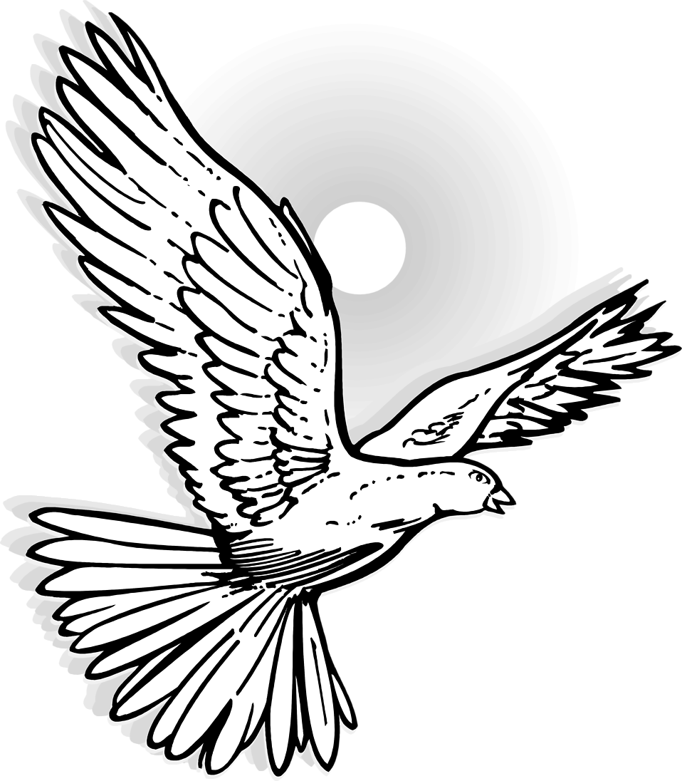 Illustration of a flying dove : Free Stock Photo