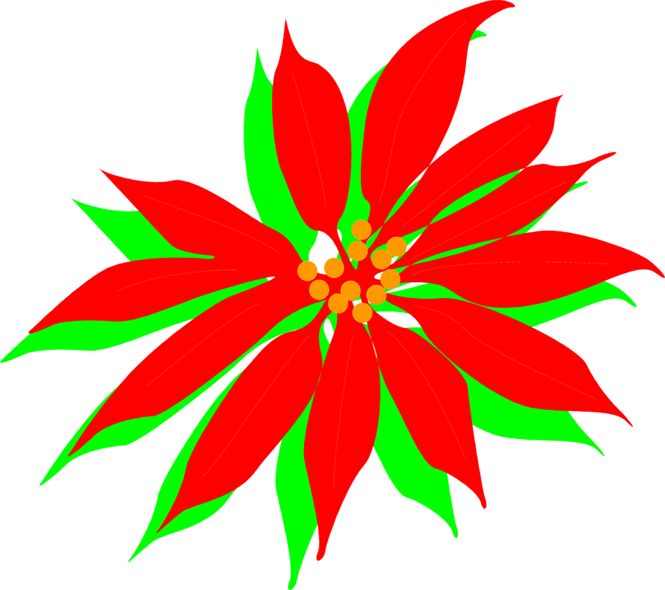 Illustration of a red poinsettia flower : Free Stock Photo