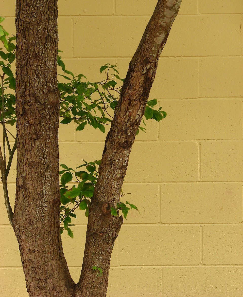 A tree by a yellow brick wall : Free Stock Photo