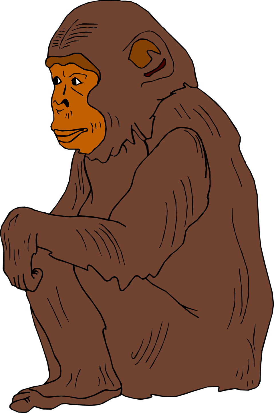 Illustration of a chimpanzee : Free Stock Photo