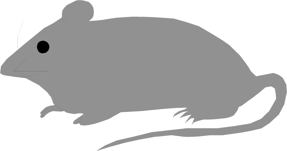 Illustration of a small gray mouse.