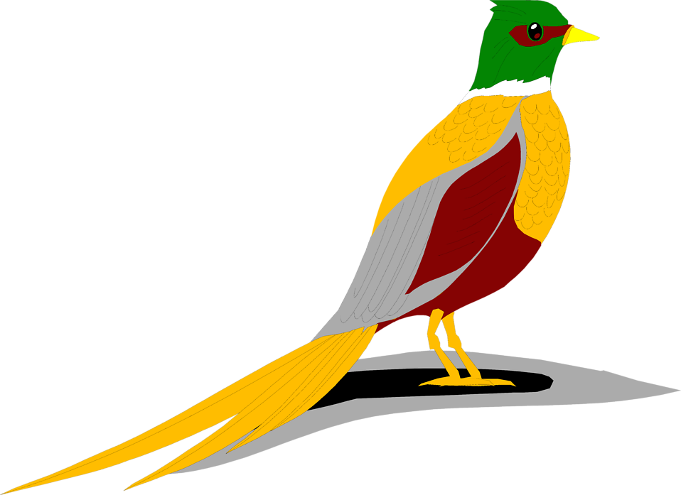 Illustration of a yellow, red and green colored bird : Free Stock Photo