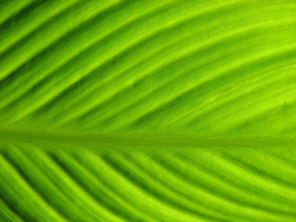 Close-up of a green leaf : Free Stock Photo