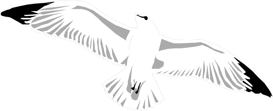 Illustration of a sea gull flying : Free Stock Photo