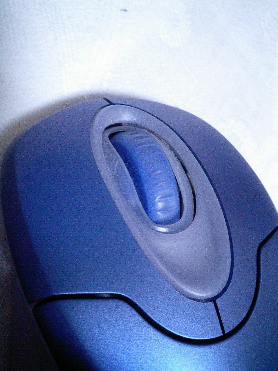 Close-up of a blue computer mouse : Free Stock Photo
