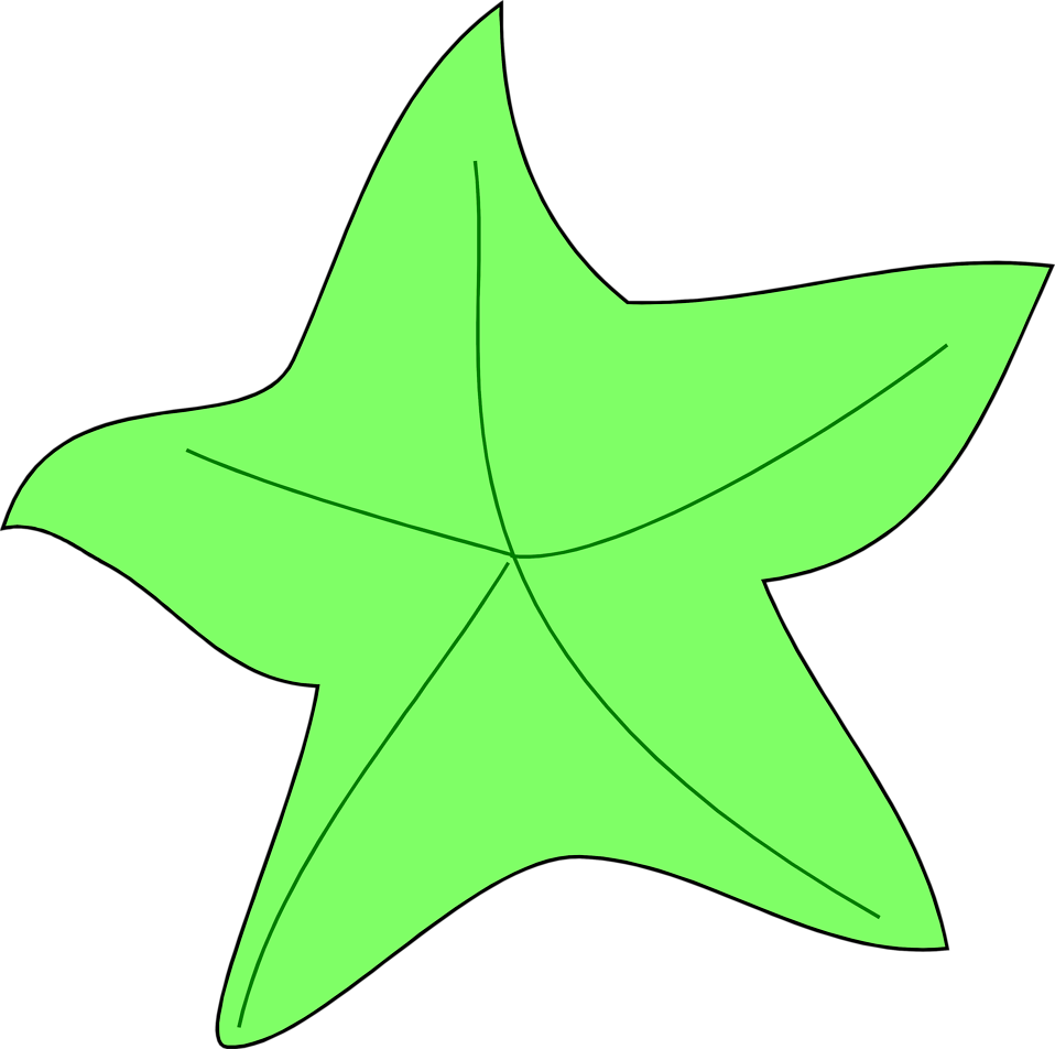 Illustration of a green starfish : Free Stock Photo
