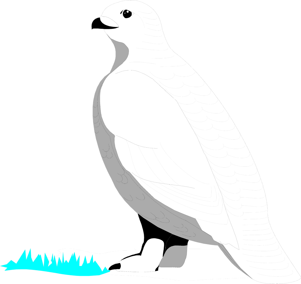 Illustration of a white bird : Free Stock Photo