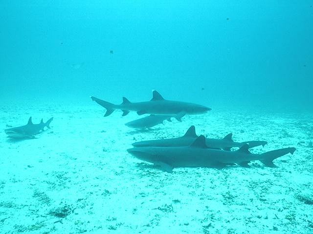 2560x1600 ocean sharks - photo #36