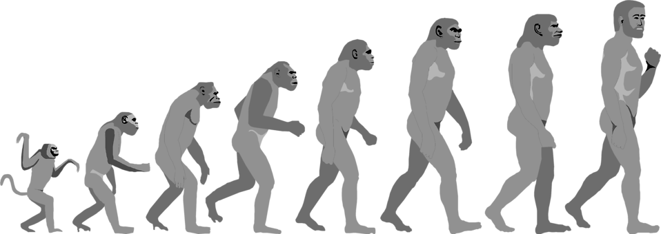 Illustration of an evolution progression : Free Stock Photo