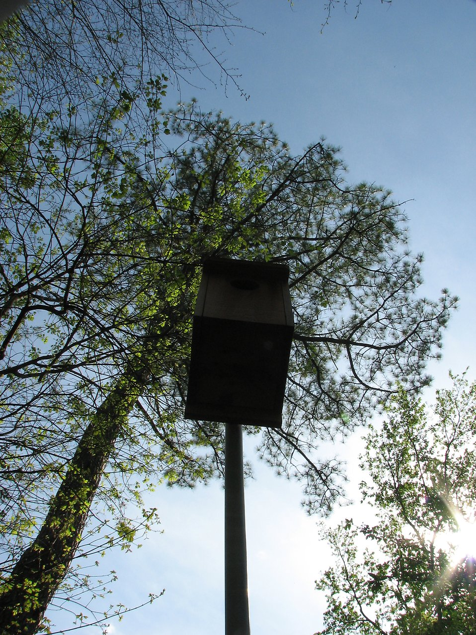 A bird house on a pole by trees : Free Stock Photo