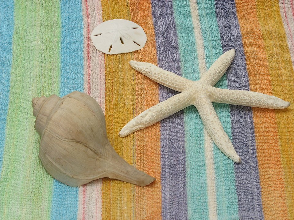 Sea shells and a star fish on a blanket : Free Stock Photo