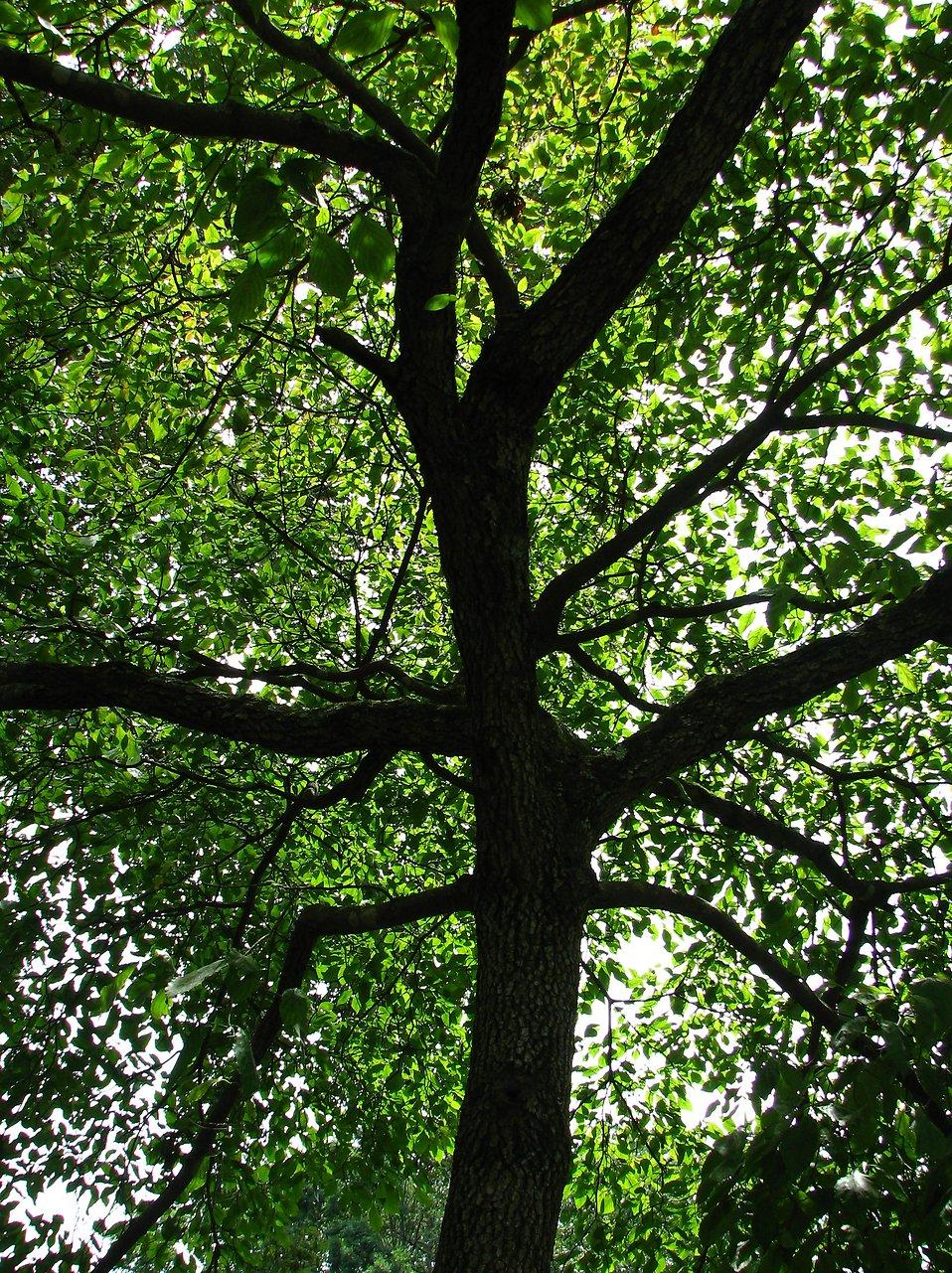 A large tree : Free Stock Photo
