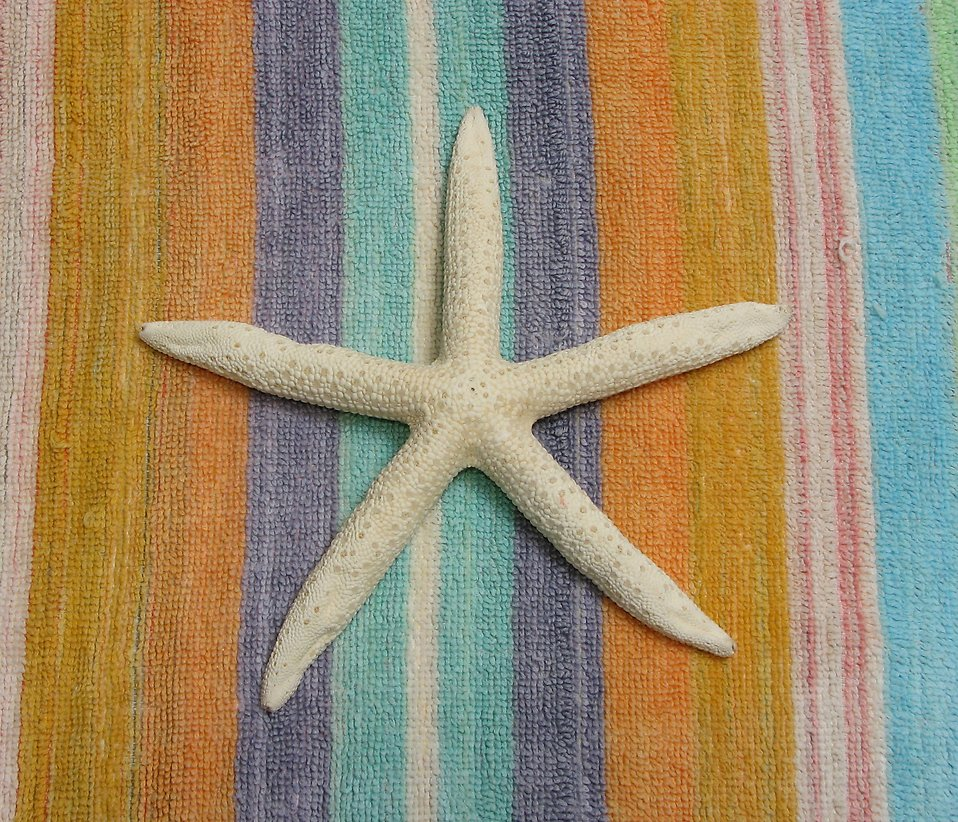 A starfish on a beach blanket : Free Stock Photo