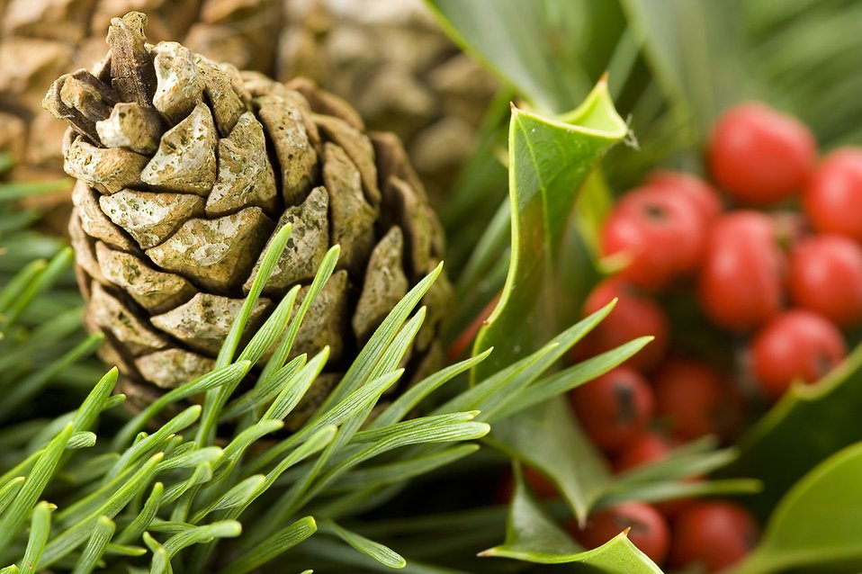 Close-up of a pine cone and berries : Free Stock Photo