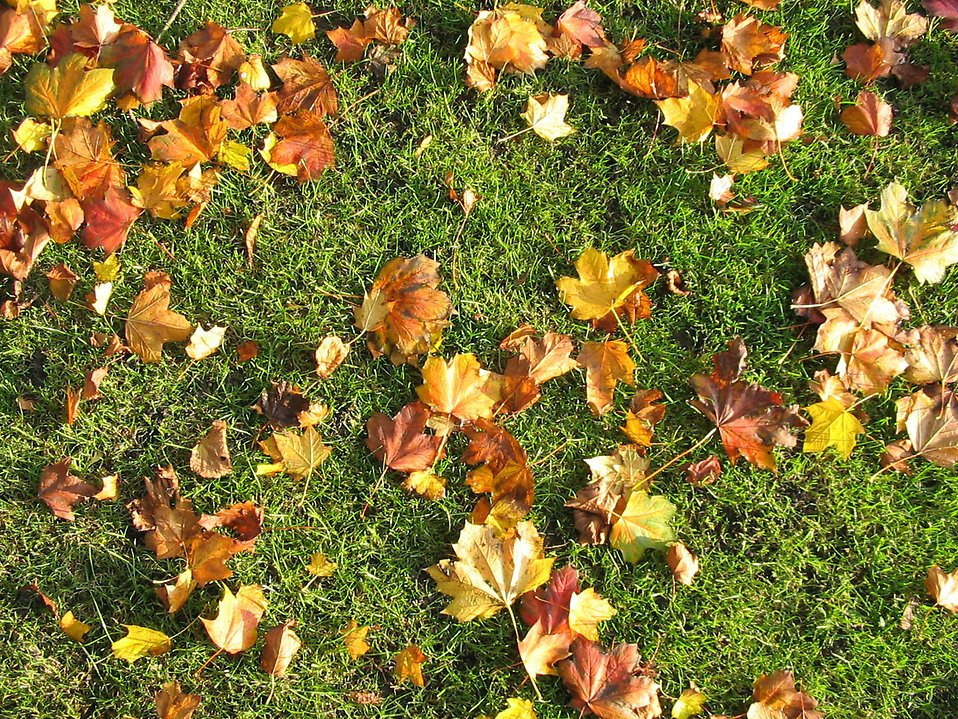 Brown autumn leaves on green grass : Free Stock Photo