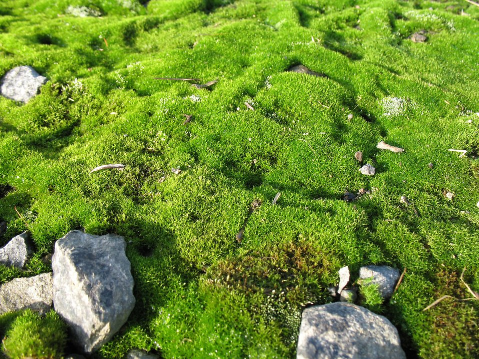 Moss covered rocks : Free Stock Photo