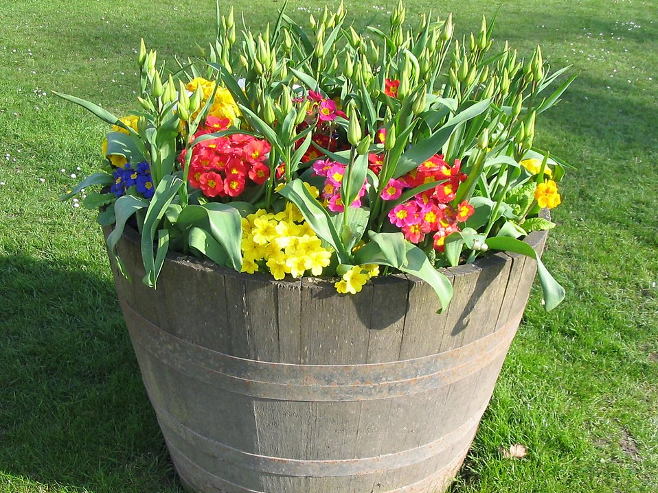 Flowers in a flower pot on the grass : Free Stock Photo