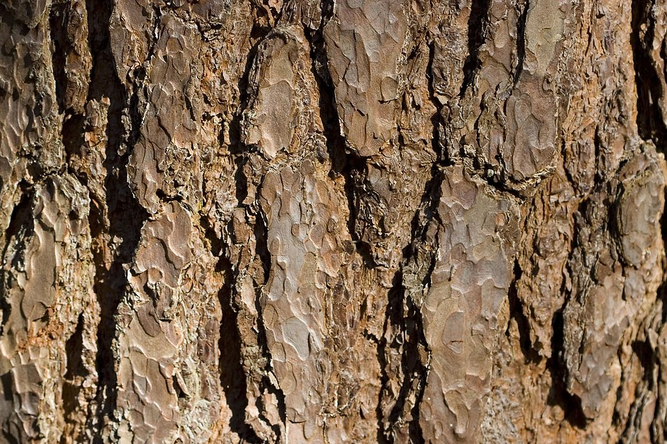 Close-up of tree bark : Free Stock Photo