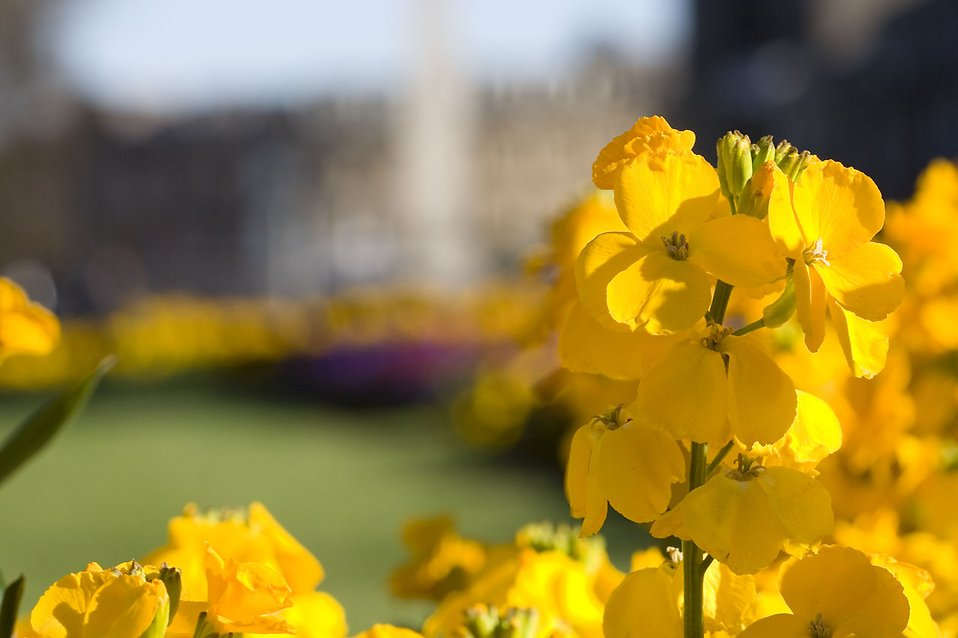 Close-up of yellow flowers : Free Stock Photo