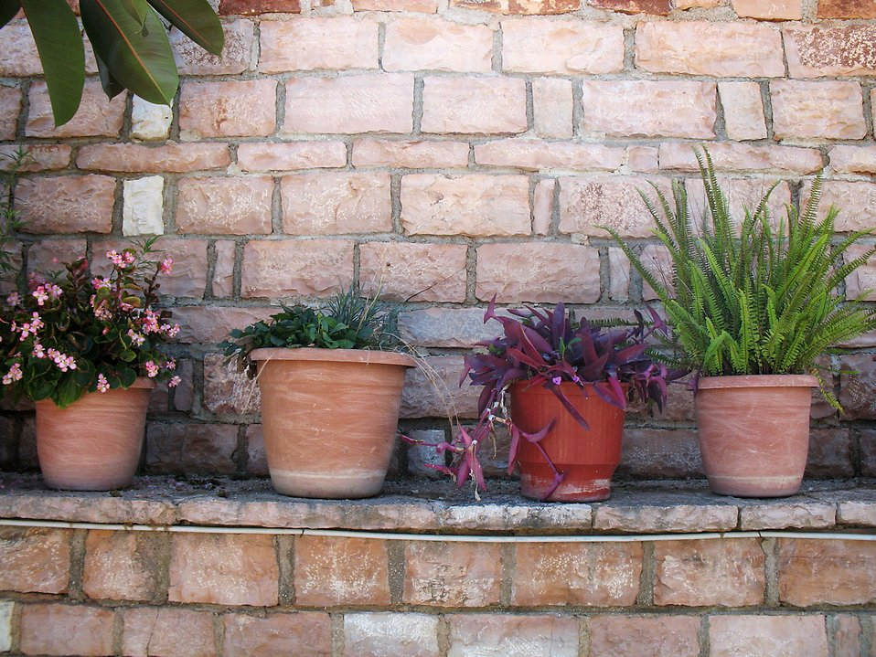 A row of potted plants on a brick wall : Free Stock Photo