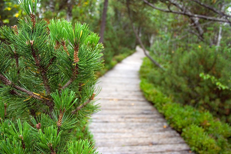 A wooden path in the woods : Free Stock Photo