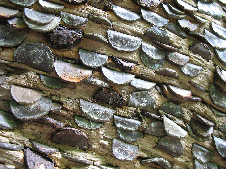 Coins hammered into a trunk : Free Stock Photo