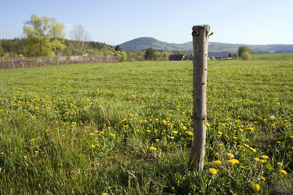 A wooden stake in a field : Free Stock Photo