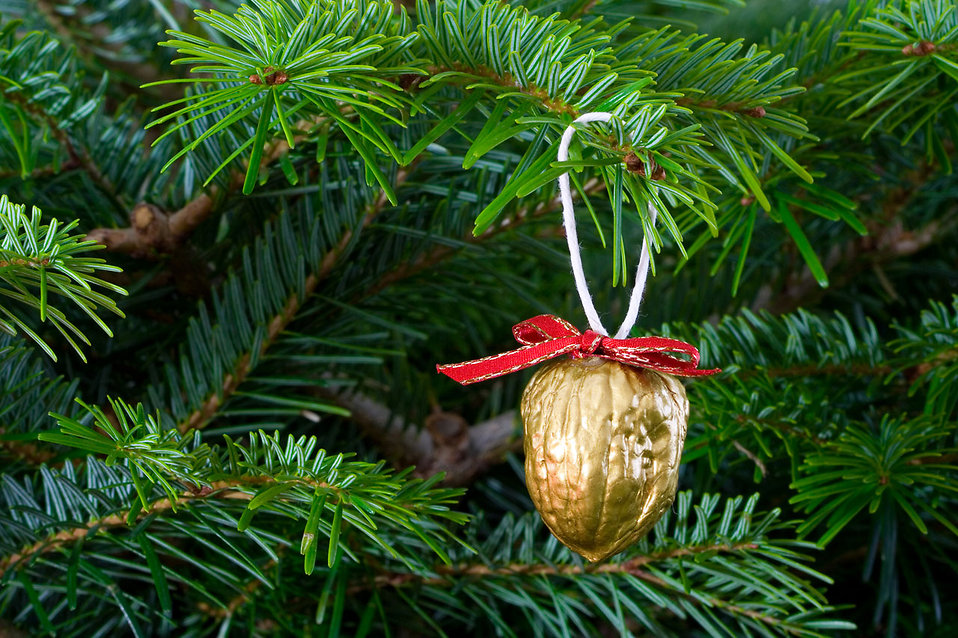 A Christmas ornament in a tree : Free Stock Photo