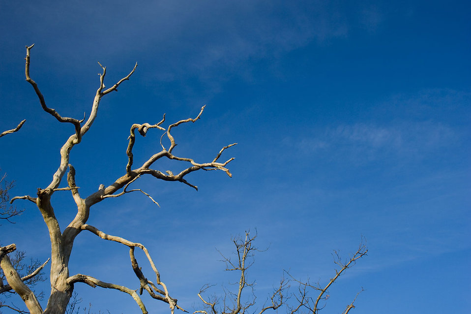 A tree with dead branches : Free Stock Photo