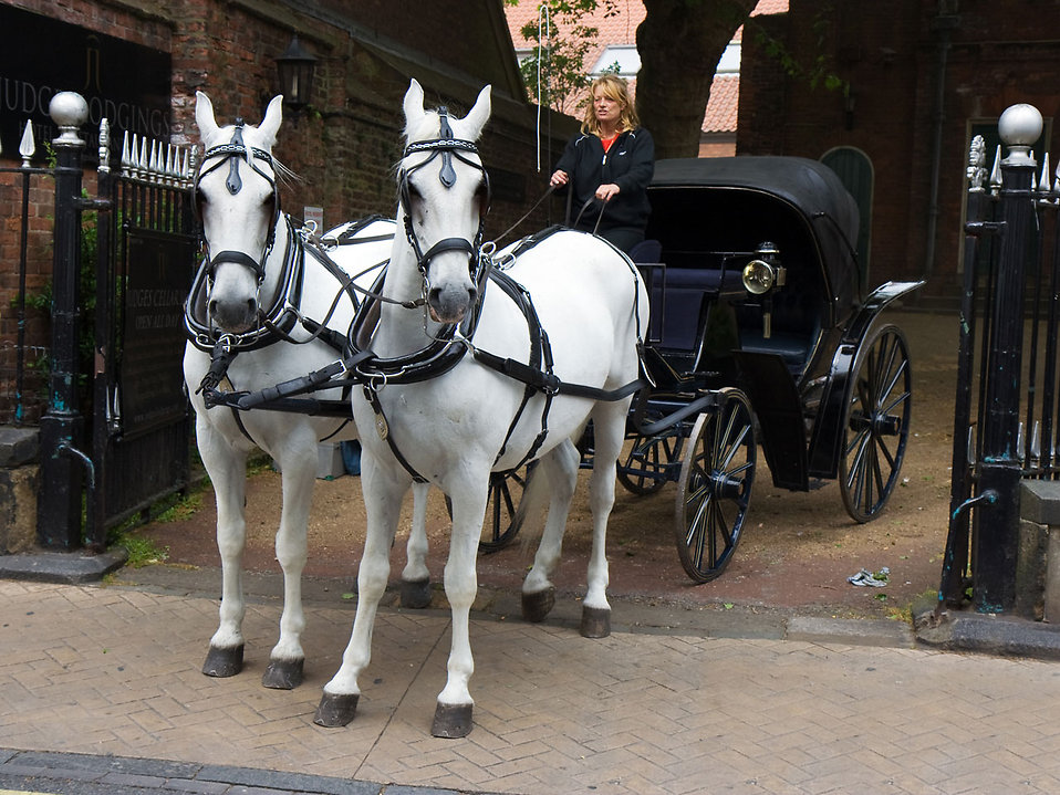 White horses pulling a carriage : Free Stock Photo
