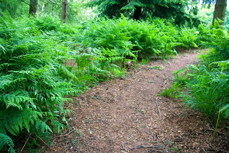 A path surrounded by green plants : Free Stock Photo