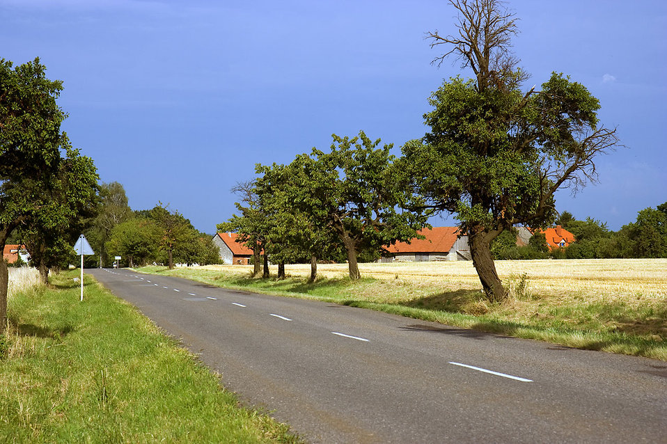 A country road : Free Stock Photo