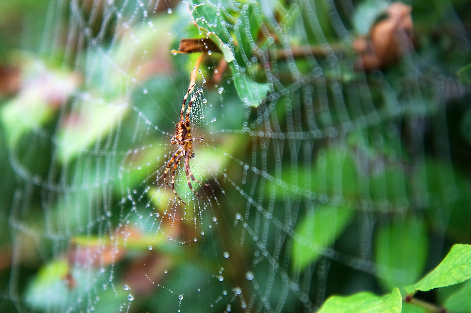 A spider in a web by leaves : Free Stock Photo